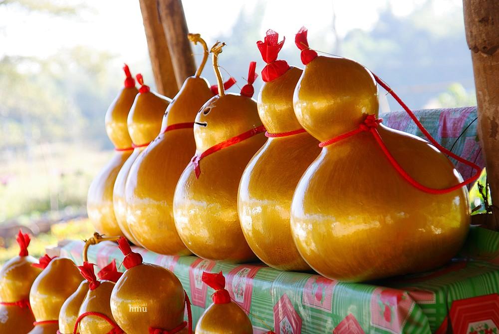 น้ำเต้า ผลไม้มงคลดึงดูดทรัพย์ ทำมาค้าขายร่ำรวย - s;p tookhuay.com - ถูกหวย ทุกหวย รวยไปกับเรา หวยออนไลน์